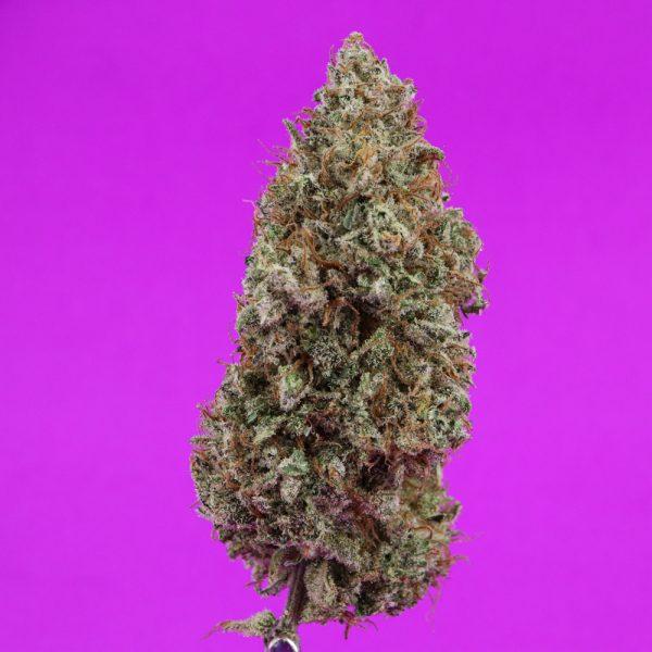 lilac-d-3